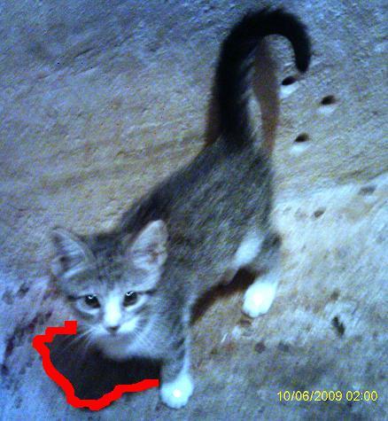 El gato que no sab a cazar blog del cp de uju - Como cazar un raton en un piso ...