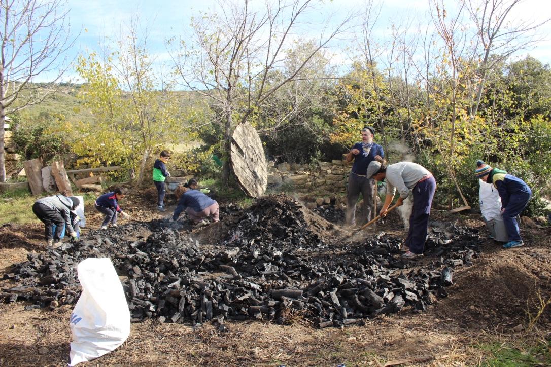 Cómo Se Hace Una Carbonera Y Usos Del Carbón Blog Del Cp
